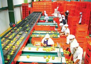 AGAP: Ley Agraria que trabaja Comisión Multipartidaria del Congreso dejará sin empleo a más de 200 mil peruanos