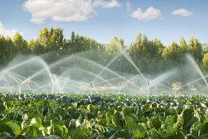 Agricultura altamente productiva y sostenible