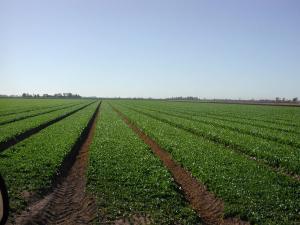 AGROECOLOGÍA DUPLICARÍA PRODUCCIÓN ALIMENTARIA EN 10 AÑOS