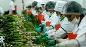 Agroexportación generó el 44.8% del total de puestos laborales creados por las exportaciones peruanas