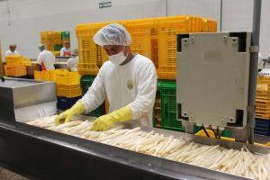 Agroexportaciones generaron más de 207 mil puestos de trabajo en el primer bimestre