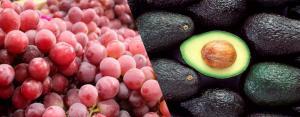 Agroexportaciones no tradicionales de Lima pierden terreno frente a las de Ica en el periodo enero julio del 2010 / 2021