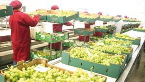 Agroexportaciones peruanas crecen 1.5% en el primer cuatrimestre del año