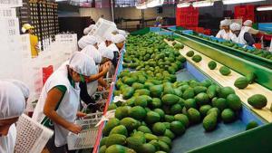 Agroexportaciones peruanas crecieron 0.8% en los primeros cinco meses del año