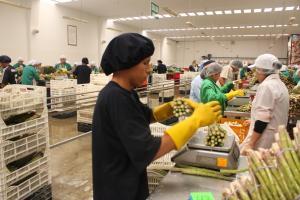 Agroexportaciones peruanas crecieron 2.4% en los primeros cinco meses del año