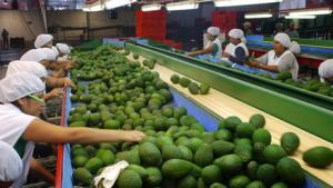 Agroexportaciones peruanas de frutas y hortalizas crecen 9.4% entre enero-mayo de este año