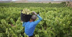 Agroideas aprobó 14 planes de negocio en beneficio de 458 productores