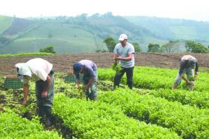 Agroideas atendería a 9.030 productores el 2020 con presupuesto asignado