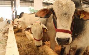 Agroideas capacita a productores para fortalecer su competitividad en el mercado