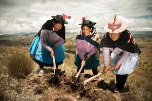 Agroideas cofinanciará Plan de Negocio a productores que donaron alcohol antiséptico, elaborado a base de papa nativa en Huancavelica