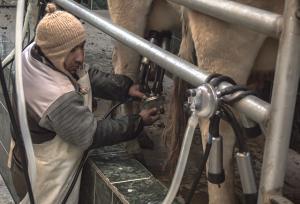 Agroideas invirtió S/ 64.2 millones en adopción tecnológica para potenciar industria lechera