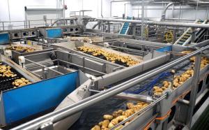 Agroindustria en base a papa (blanca): ¿Solo las importaciones impiden su desarrollo?