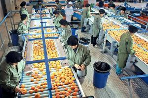 Agroindustria y construcción liderarán la reactivación