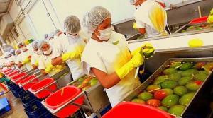 Agromar evalúa incursionar en cultivo de berries en 2019