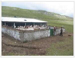 AGRORURAL IMPLEMENTA 138 COBERTIZOS EN JUNÍN