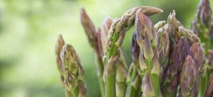 Agrovisión invertirá US$ 30 millones en espárragos, uvas y arándanos