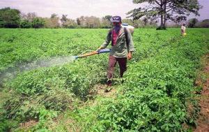 Algunos productores de espárragos y paltas usan agroquímicos genéricos para abaratar costos