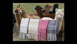 Alpaca Fiesta generó compromisos de negocios por US$ 8 millones