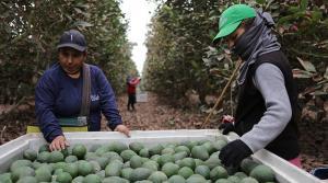 Alza salarial en sector agrario afectará mucho más a empresas menos competitivas