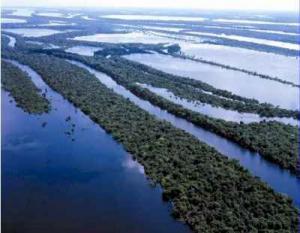 AMAZONAS FAVORECERÍA PRODUCCIÓN AGRÍCOLA E HIDROBIOLÓGICA