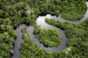 AMAZONAS: LA REGIÓN CON MAYOR PARTICIPACIÓN DEL AGRO