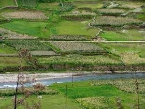 AMÉRICA LATINA Y EL CARIBE RECUPERARÁN PRODUCCIÓN AGRÍCOLA EN EL 2010