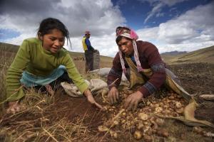 Análisis de las propuestas para el agro nacional
