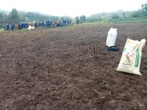 Áncash: emplean guano de islas para incrementar calidad de pastos para ganado