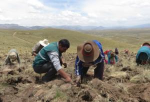 Aplicación de buenas prácticas otorga papas con alto valor para los consumidores peruanos