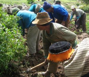 ASOCIATIVIDAD ENTRE PEQUEÑOS AGRICULTORES IMPULSA COMPETITIVIDAD