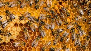 Autorizan primer establecimiento de procesamiento de miel en Lima Metropolitana