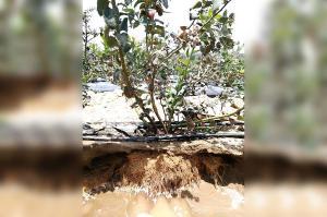 Avibiol Bioefector actúa de manera sostenible en la interacción de las raíces con su medio