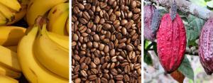 Banano, café y cacao, los productos agrícolas peruanos más demandados en Bélgica