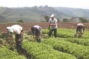 Banco Mundial destina cerca del 10% de su cartera global de préstamos al fomento del desarrollo agropecuario