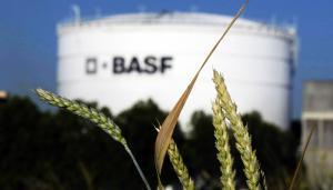 BASF producirá semillas en Piura e Ica tras compra del negocio a Bayer
