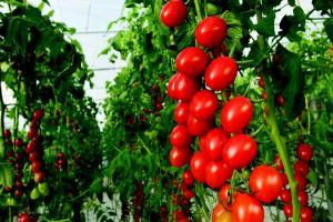 Bayer lanza cartera de semillas de hortalizas ecológicas