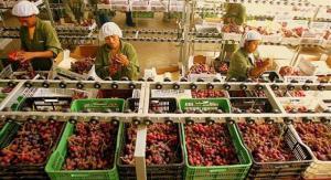 Beta exportó 25 millones de kilos de uva en la campaña 2019/2020