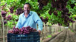 Beta proyecta producir 15% más de uva de mesa este año