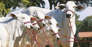 Bolivia: el ejemplo de los ganaderos de Santa Cruz en su implementación de medidas sanitarias