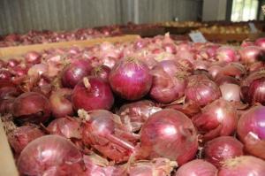 Bolivia restringe importación de papa, cebolla y otras hortalizas procedente de Perú