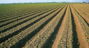 Boom agroexportador se debe a la modernización de los huertos precarios y no a los grandes proyectos de irrigación