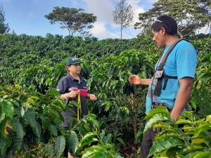 Cafetaleros de la Selva Central fortalecen capacidades para el control de plagas en sus cultivos