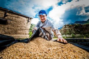 Cafetaleros del Monzón exportarán más de 53 toneladas de café a Europa