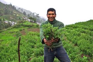 Cajamarca: planes de negocios de granadilla y café beneficiaron a 700 productores