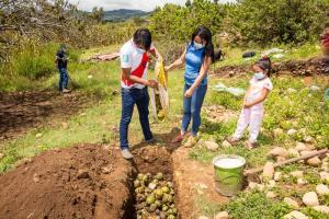 Cajamarca: Senasa promueve acciones de control cultural para erradicar mosca de la fruta en Chota