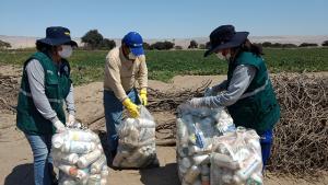 Campañas integradas recolectaron más de 700 kilos de envases vacíos de plaguicidas en Cañete
