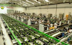 Camposol incrementó su volumen de ventas un 30.6% entre enero y septiembre