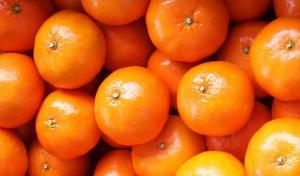 Camposol inicia plantaciones de nuevas áreas de cítricos en Uruguay