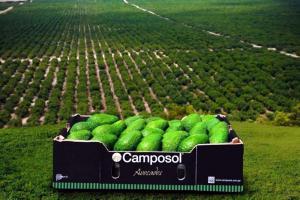 Camposol priorizará packing de palta