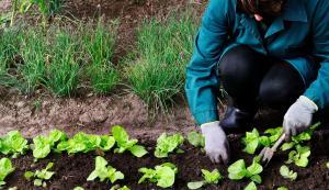 Cancillería peruana prevé enviar a la OMC observaciones sobre nueva legislación ecológica de la Unión Europea